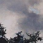 Trees portrait 2